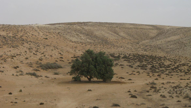 תיאור עקרוני של אתרי המורשת בתכנית שמורת-טבע חולות שונרה, כלך סיני, נחל לבן